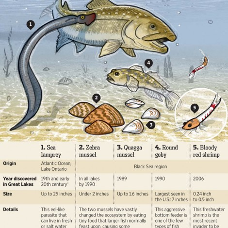 80 Invasive species in the Great Lakes