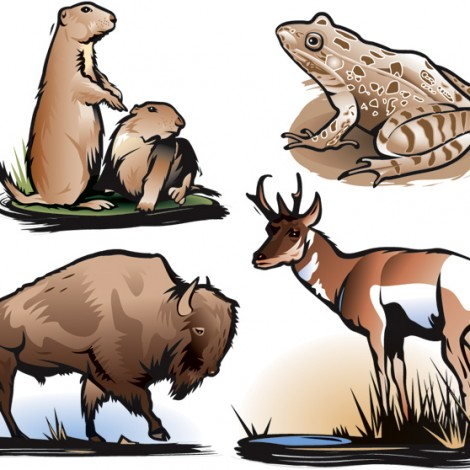 08 Animals of the U.S. plains