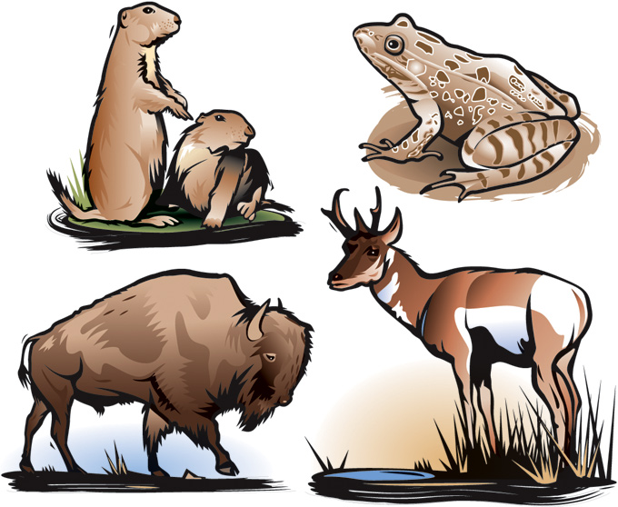 Animals of the U.S. plains