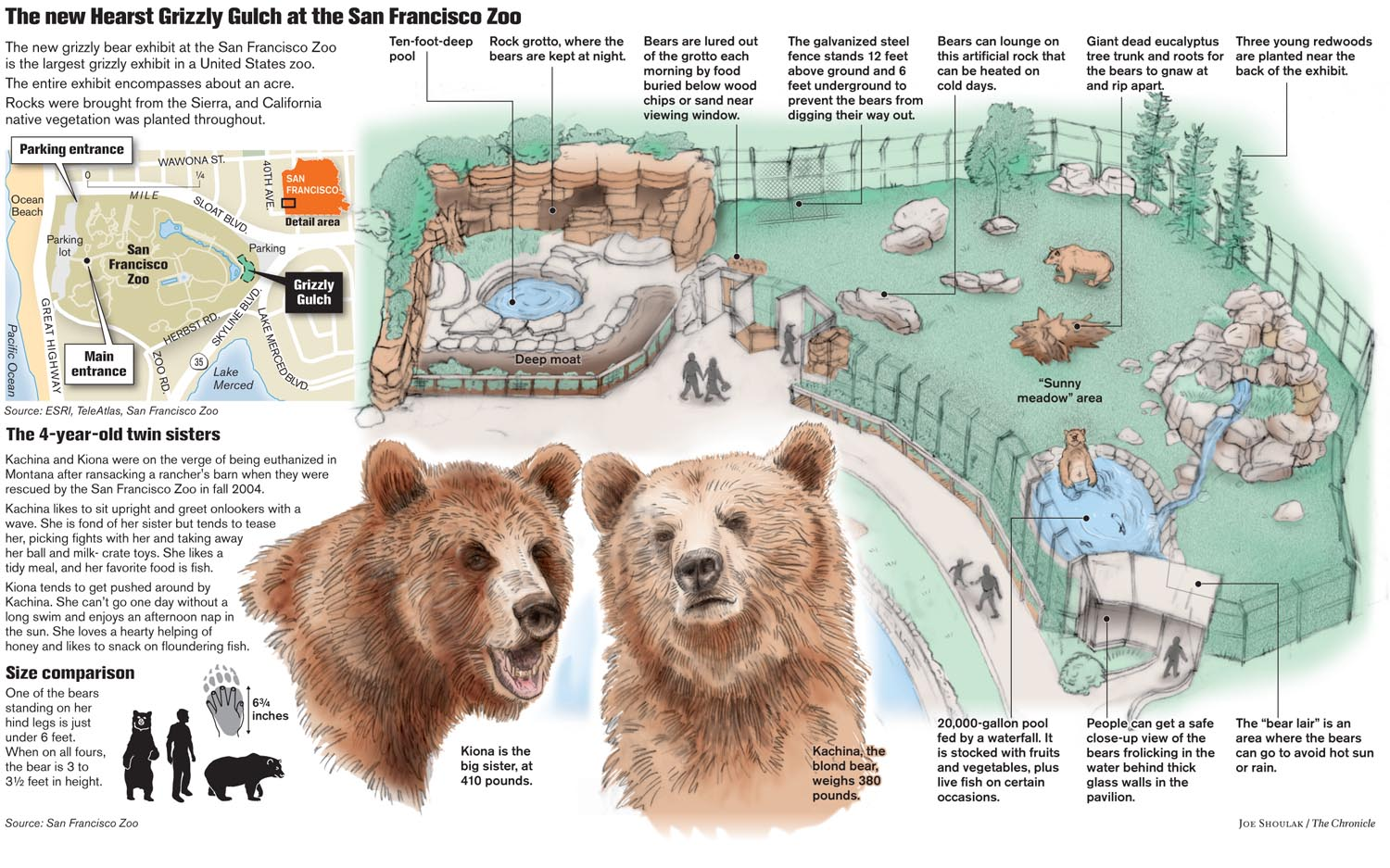 Grizzly bears at the San Francisco Zoo
